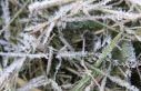 Yarın ve pazar sabahı don bekleniyor