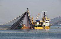 Ziraat Mühendisleri: İzinsiz gırgır gemilerine müdahale edin