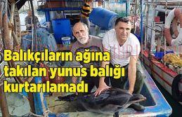 Yeni Erenköy'de ağlara takılan yunus kurtarılamadı