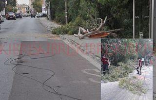 Ağaç dalı, elektrik tellerini kopardı, bir kişi...