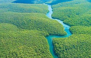 Amazonlar'daki orman tahirbatı artıyor