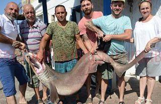Toplam 225 kiloluk köpek balığı yakaladılar