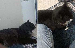 Kayıp kedisini arıyor