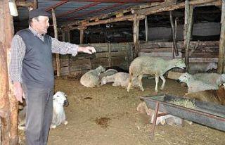Hayvan üreticilerine 256 bin 800 TL tazminat ödendi