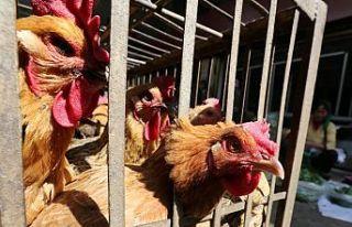 Çin'de bir de kuş gribi tehdidi