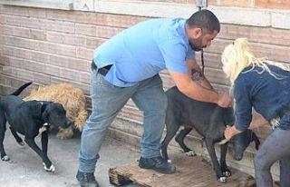 Lefkoşa barınağında 248 köpeğin yıllık karma...