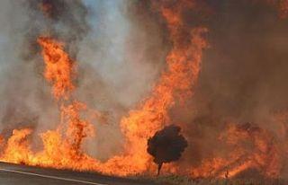 Altınova Köyü'nde yangın