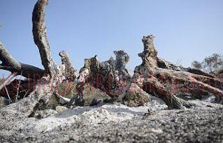 Asırlık ağaçlar ve  yaban hayatı yok oldu
