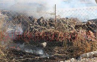 2 dönümlük alan yandı