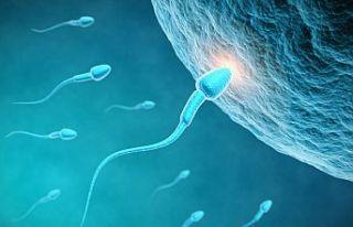 Epidemiyolog Swan, 2045'te sperm sayısının sıfır...