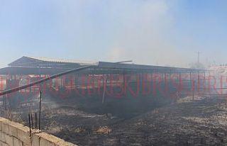 8 adet akasyaağacı yandı