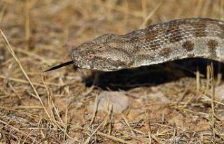Doç.Dr.Nazım Kaşot Kıbrıs'ın yılanları ile...