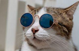 Avustralya'nın Melbourne kentinde kedilere sokağa...