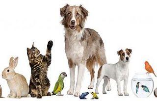 Hayvanları Koruma Kanunu, TBMM Komisyonu'nda...