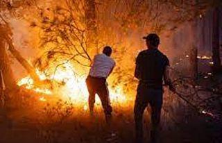 FAS'ın kuzeyinde çıkan orman yangınlarının...