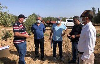Yerli zeytin tescili için Türkiye Bitkisel Üretim...