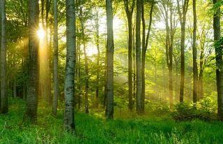 Ağaçların gizlice birbirleriyle konuştukları...