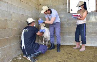 Hayvan hastalıkları tespitinde birinci tur tamamlandı