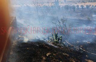 50 dönümlük ormanlık arazi yandı !