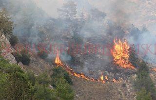 Alayköy'de arazi yangını