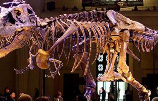 Güney Afrika'da yeni dinozor türü keşfedildi