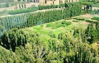 Atatürk Orman Çiftliği'nde yüksek yapılaşma...