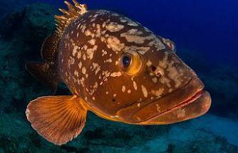 Orfoz balığı avladı, hakkında yasal işlem başlatıldı
