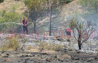 50 çam ağacı yandı