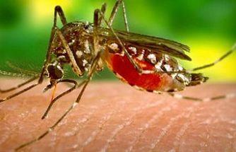 Batı Nil Virüsü teşhisi konan Aktaş hayatını kaybetti
