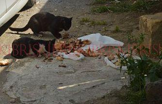 Hayvanlar için sokağa mama ve yemek bırakılıyor