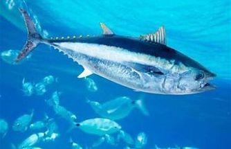 Hayvancılık Dairesi: KKTC bayrağı taşımayan gemiler KKTC karasularında avcılık yapamaz