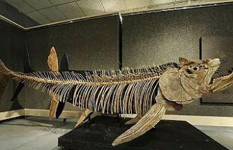 Arjantin'de bulunan balık fosili 70 milyon yıllık çıktı