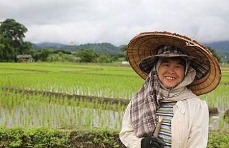 Kuzey Tayland'ın çiftçileri