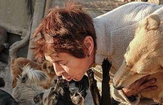 Rus kadın, bahçesinde 700 köpeğe bakıyor