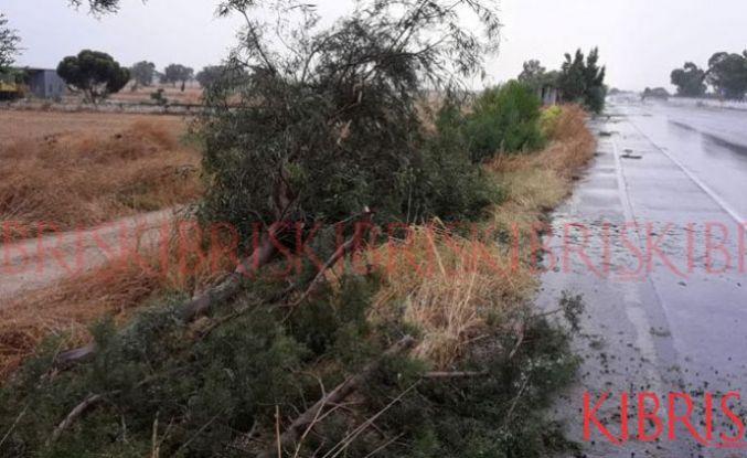 Ağaçlar yola devrildi