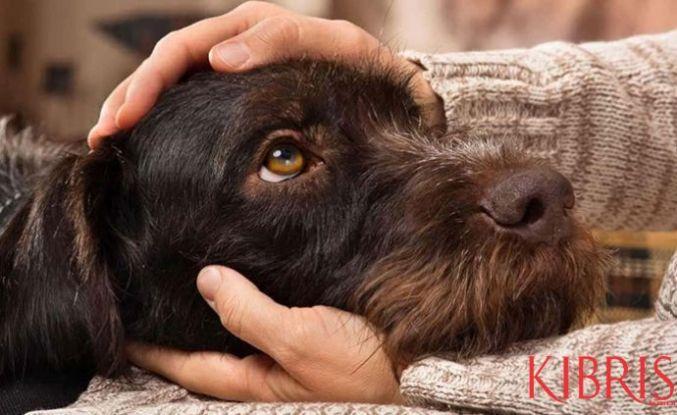 Köpekler, üzgün bakışlarını ilgi çekmek için zamanla edinmiş