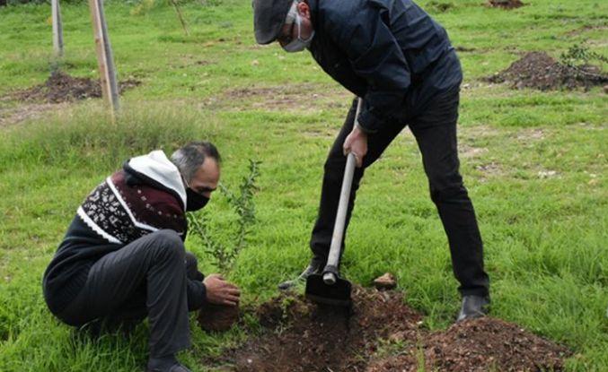 Girne Belediyesi ekipleri Bellapais'te fidan dikti
