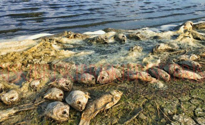 Göl kenarı, ölü  balıklarla doldu