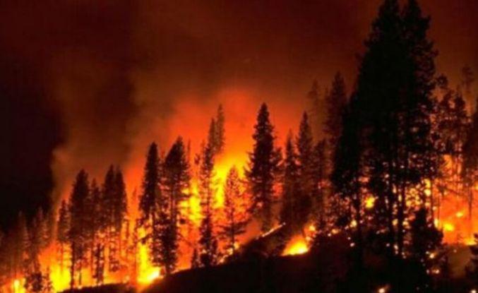 Orman Yangınlarına ilişkin Meclis Araştırma Komitesi raporu
