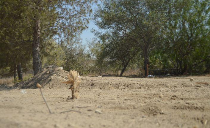 Bir doğa katliamı daha!150 çam ağacınıyok ettiler
