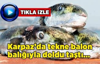 KARPAZ'DA TUTTUKLARI BALON BALIKLARI TEKNE DOLDU TAŞTI